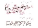Логотип Студия свадеб и праздников Сакура